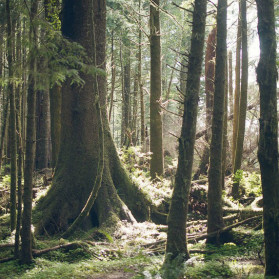 A Forest is a cooperative system